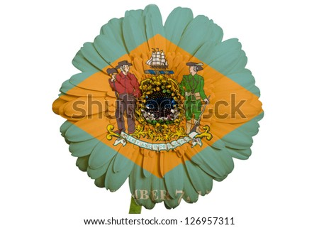 gerbera daisy flower in colors flag of us state of delaware on white background as concept and symbol of love, beauty, innocence, and positive emotions - stock photo