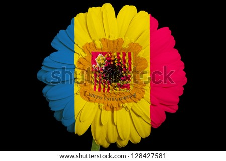 gerbera daisy flower in colors national flag of andorra on black background as concept and symbol of love, beauty, innocence, and positive emotions - stock photo