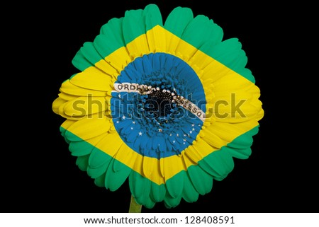 gerbera daisy flower in colors national flag of brazil on black background as concept and symbol of love, beauty, innocence, and positive emotions - stock photo