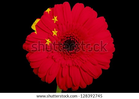gerbera daisy flower in colors national flag of china on black background as concept and symbol of love, beauty, innocence, and positive emotions
