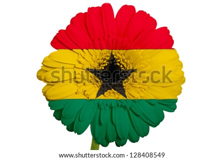 gerbera daisy flower in colors national flag of ghana on white background as concept and symbol of love, beauty, innocence, and positive emotions - stock photo