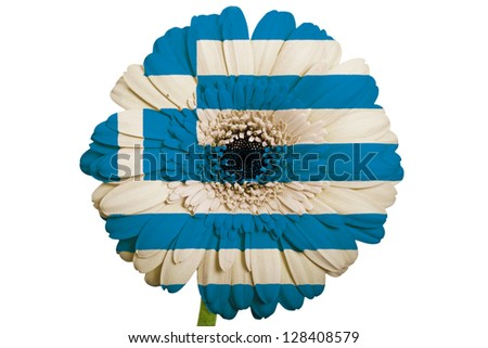 gerbera daisy flower in colors national flag of greece on white background as concept and symbol of love, beauty, innocence, and positive emotions - stock photo