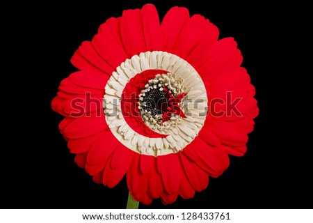 gerbera daisy flower in colors national flag of tunisia on black background as concept and symbol of love, beauty, innocence, and positive emotions - stock photo