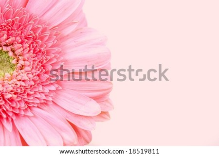 Gerbera Daisy on Pink Background - stock photo