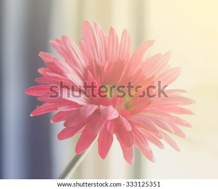 Gerbera flower in gradient filter
