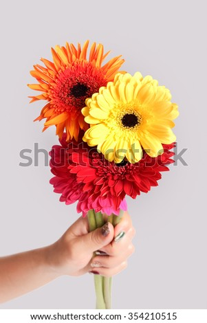 gerbera flower in hannd on isolated white background decoration design idea