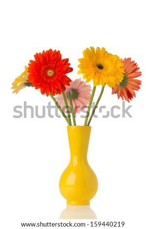 Gerbera flower on the vase, isolated white background. - stock photo