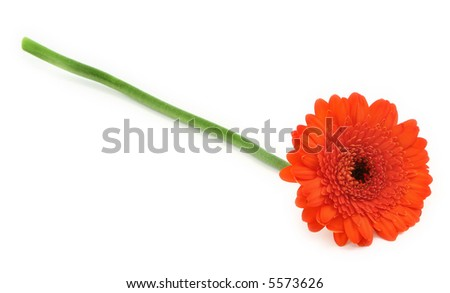 gerbera flower on white, gentle shadow at the left side - stock photo
