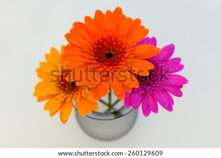 Gerbera flowers in vase isolated on white background