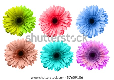 Gerbera flowers of bright colors isolated on white background - stock photo