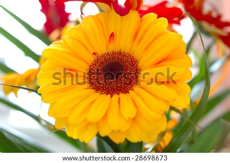 Gerbera flowers with palm leaves - bright red and yellow bouquet.