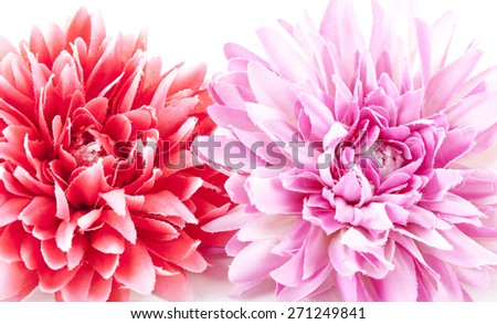 Gerbera red and pink  on white background - stock photo