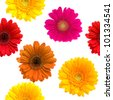 Gerbera seamless pattern floral background - stock photo