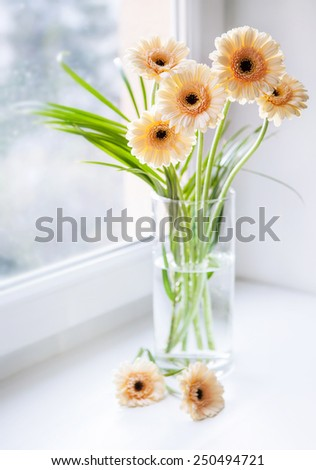 Gerberas bouquet on the windowsill with bright daylight - stock photo