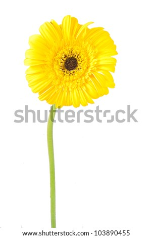gerberas, flowers and natural backgrounds