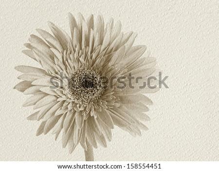 Gerder flower on white texture paper - stock photo