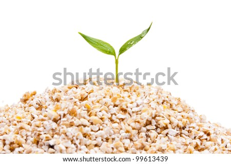 germ of cereals - stock photo
