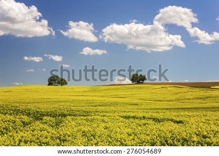 German agriculture landscape -  rapeseed field  - stock photo