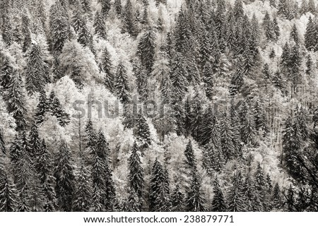 German Black Forest in Winter. Top Down View from the Feldberg Mountain during a Snow Storm. Winter Landscape. Black and White Vintage Picture - stock photo