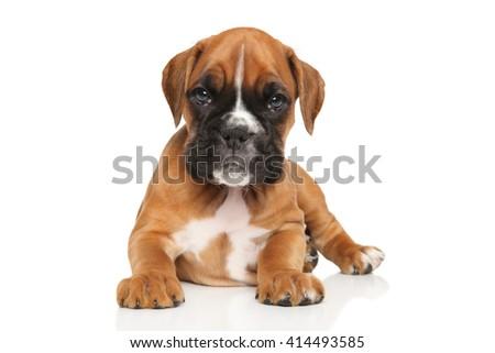 German boxer puppy on white background - stock photo