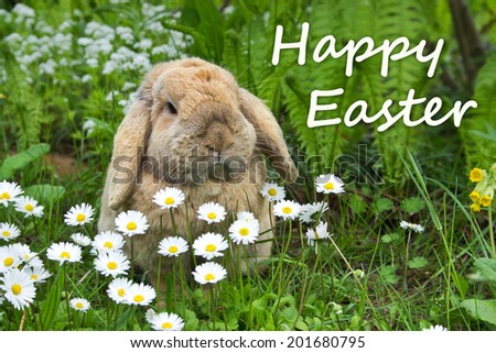 german  Easter card with a rabbit / Happy Easter  - stock photo