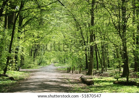 german forest in spring - stock photo