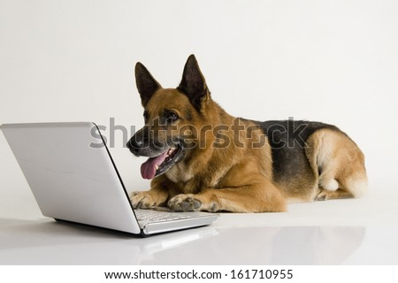 German Shepherd dog using a laptop