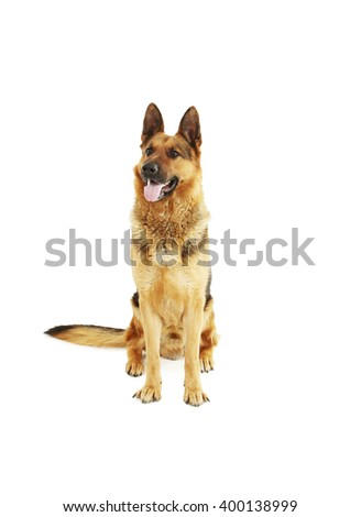 German shepherd isolated on a white background - stock photo