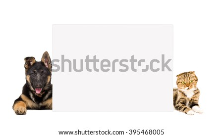 German Shepherd puppy and cat Scottish Fold lying, peeking from behind banner, isolated on white background - stock photo