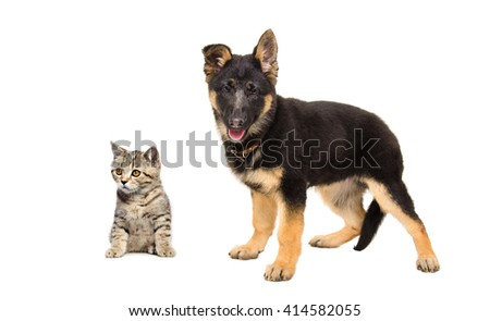German Shepherd puppy and kitten Scottish Straight isolated on white background - stock photo