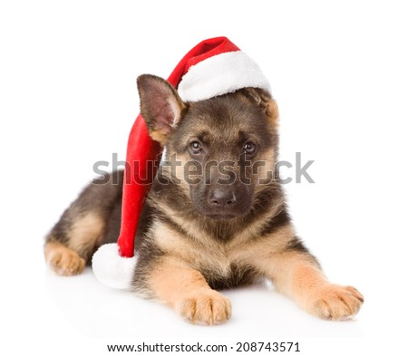 German Shepherd puppy with red hat. isolated on white background - stock photo