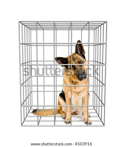 German shepherd sitting in a cage. - stock photo
