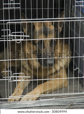German shepherd sitting in a car cage. - stock photo