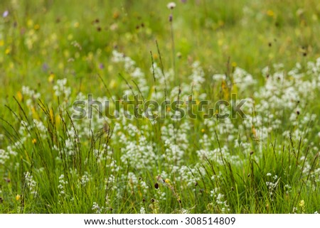 Germany, Bavaria, neglected grassland, grasses and wildflowers - stock photo