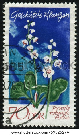 GERMANY- CIRCA 1970: stamp printed by Germany, shows Round-leaved wintergreen, circa 1970.