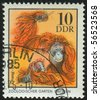 GERMANY - CIRCA 1975: stamp printed in Germany, shows Orangutan family, circa 1975. - stock photo