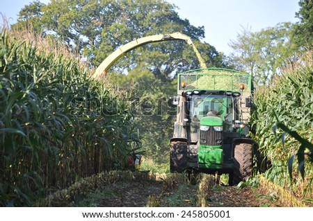 Germany - Schleswig Holstein - October 10, 2014: Corn crop for biogas energy - stock photo