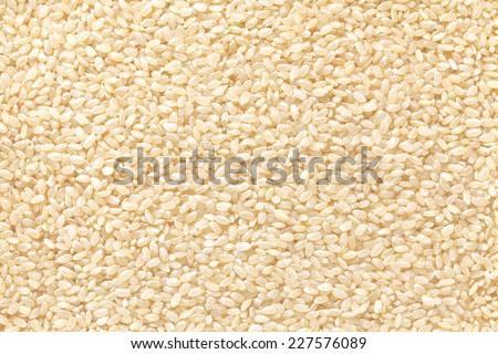 germinated brown rice - stock photo