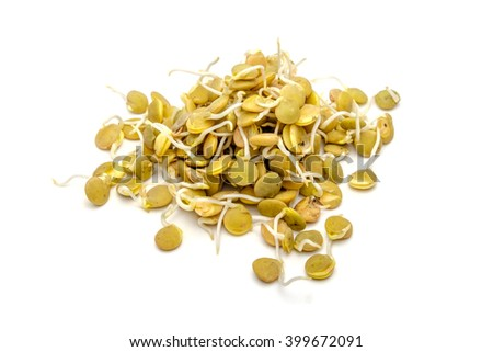 Germinated lentil isolated on a white background - stock photo
