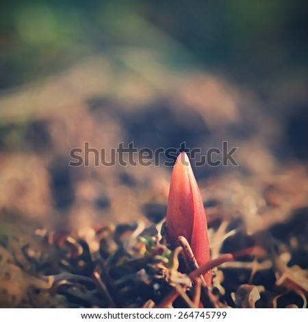 Germinating new plants sprout. New spring plant growing in the garden. - stock photo