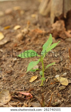 Germination is the new life of green seedlings. - stock photo