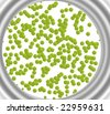 Germs in Petri Dish - stock photo