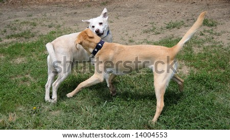 Getting To Know You - Two dogs playing at the paws park. - stock photo