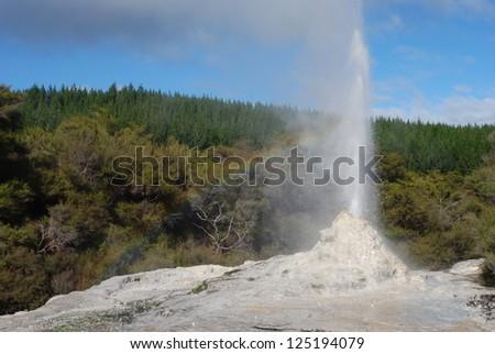 Geyser near Rotorua, New Zealand - stock photo