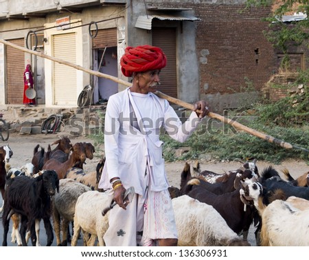 GHANERAO,  INDIA - MARCH 10: a shepherd, wearing a red headdress, is walking beside his goats  during the summer transhumance, on March 10, 2013, in Ghanerao, India.