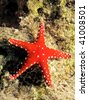 ghardaqa sea star (fromia ghardaqana) - stock photo