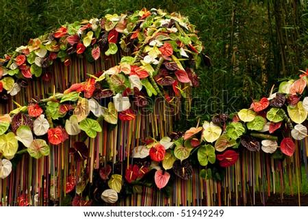 GHENT, BELGIUM - APRIL 23: The Ghent Floralies (de Gentse Floralien ) 34th edition of prestigious flower and plant exhibitions on April 23, 2010 in Ghent (Gent), Belgium. Anthurium. - stock photo