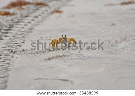 Ghost Crab - stock photo