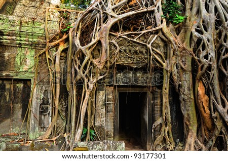 Giant banyan  tree covering the stones of the fascinating temple of Ta Prohm in Angkor Wat, Siem Reap, Cambodia - stock photo