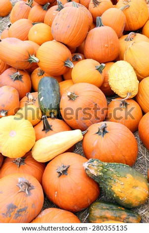 giant bumpy gourd and pumpkin at the market place - stock photo